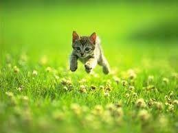 photo petit chaton mignon