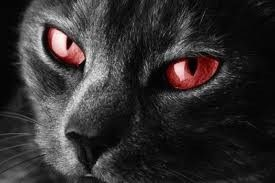 yeux rouge .